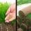 Рулонный газон или сеяный? – Вот в чем вопрос ))